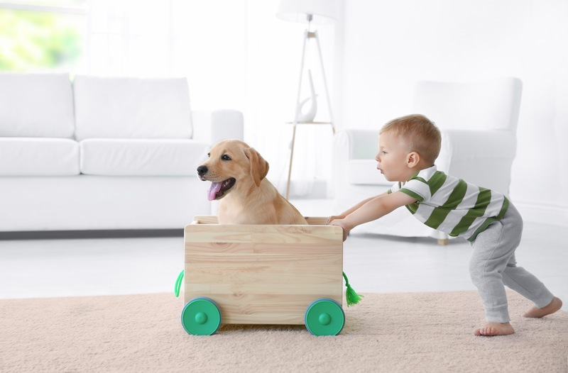 3 Tips to Consider when Kid- and Pet-Proofing Ormond Beach FL New Homes