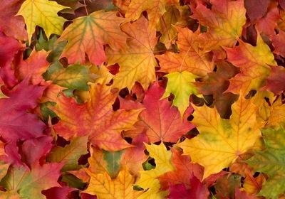 Celebrate Fall in Ormond Beach