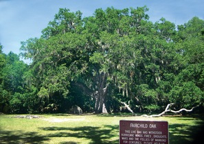 Fairchild Oak, Nature Trails across Old Dixie Highway