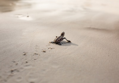 How to Prepare for Sea Turtle Nesting Season